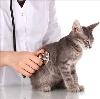 Ветеринарные клиники в Гиганте